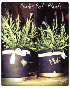 chalk pot plants