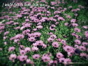 Flower_field contact